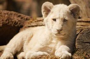 Zoo Safari Borysew - Wśród dzikich zwierząt